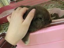 小動物(^O^)