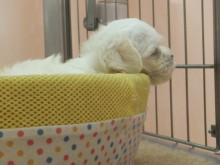 子犬の紹介(*´д`*)