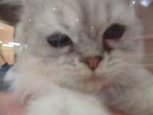 招き猫の日(='x'=)