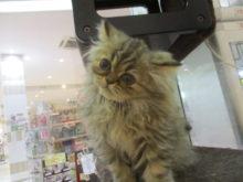 ネコちゃんたち(='x'=)♥