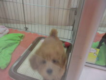 子犬(*´ω`*)
