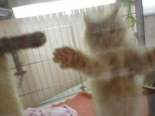 子猫たち(*´∀`)