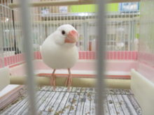 文鳥さん(*゚∀゚*)