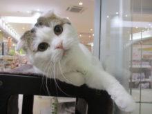 猫パンチ(='x'=)